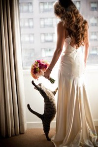 cat-with-bride-dress-detail