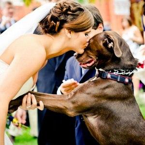 pet-in-wedding-11