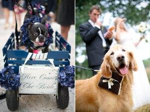 pet-in-wedding-3