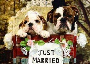 pet_weddings_06