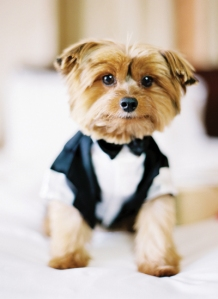 southern-wedding-pets-in-weddings